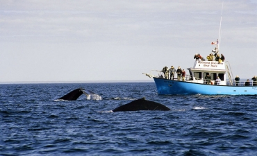Icebergs & Whales Package